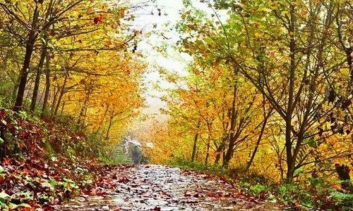 什邡红枫岭位于四川省什邡市红白镇,占地300多亩。红叶总共有十多个品种,种植最多的要数中国红枫和北美红枫。叶片大的是北美红枫,也叫加拿大红枫;叶片比较小的是中国红枫,颜色较深一些,颜色更鲜。