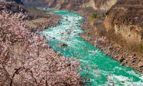 春风里| 从云南到林芝的三世桃花之路