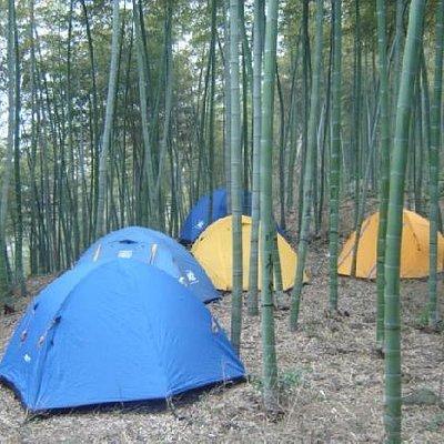 竹林中的营地