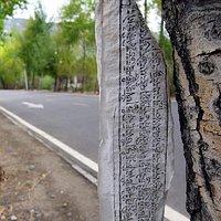 唯一一条穿越拉鲁湿地的道路——鲁定北路,同样被绿荫笼护