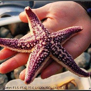 可以下去抓海星