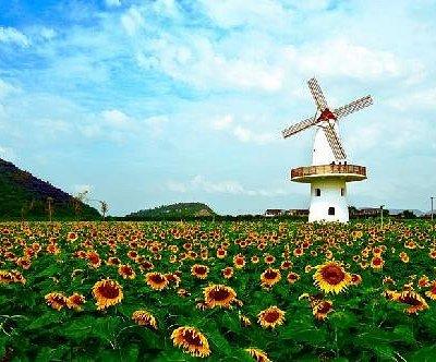 秋日里的风车向日葵
