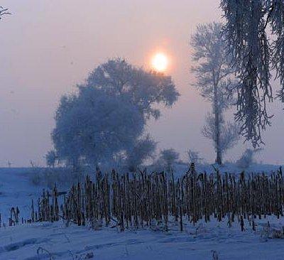 美丽的雾凇8