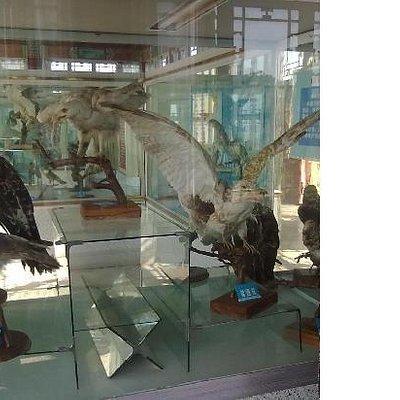 长岛鹰山博物馆