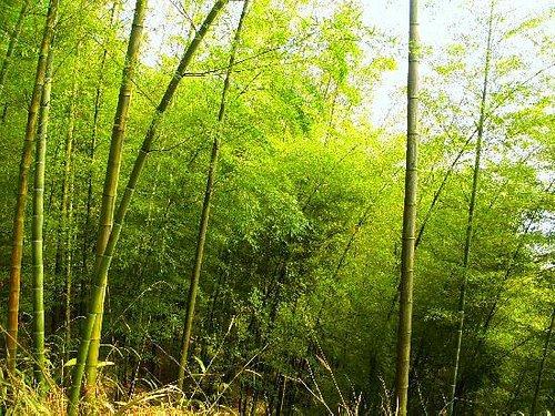 翠竹林,很美