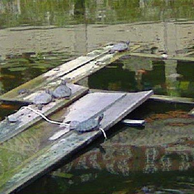 圣水寺的放生池