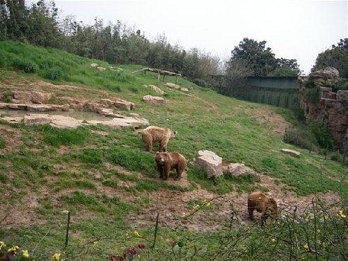 一家人,棕熊