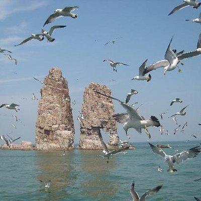 在成群结队上下翻飞的海鸥的衬托下,长岛姐妹峰显得更加美丽。