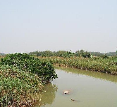 红树林湿地