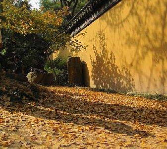 满地金黄的银杏叶