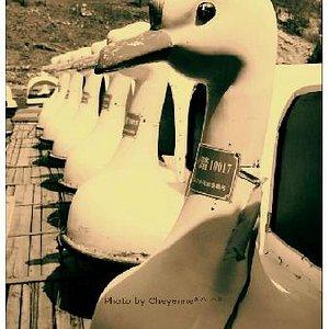 金海湖游船