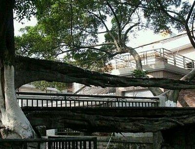 就是树生成的桥