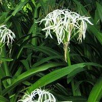 昆明篆塘公园里的花儿