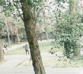 美丽的罨画池公园