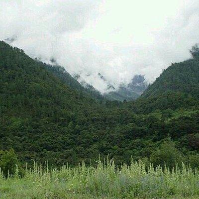 东久自然保护区的森林