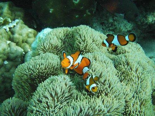 Nemo famillly