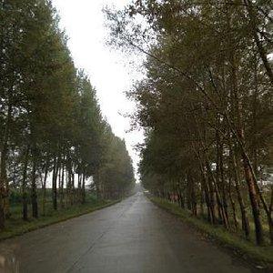 铁山坪森林公园
