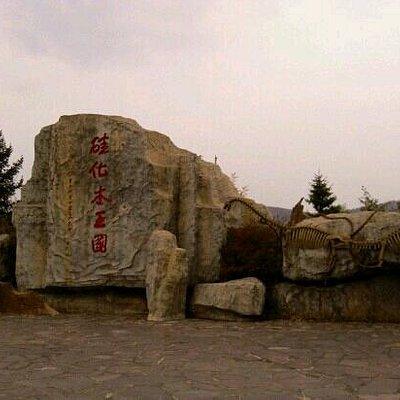 硅化木公园