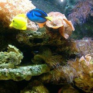 海底世界真漂亮