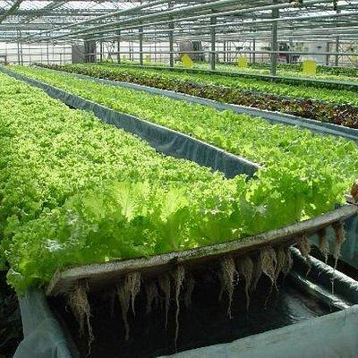 园里种的菜