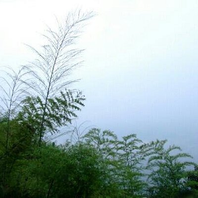 长宁竹海保护区