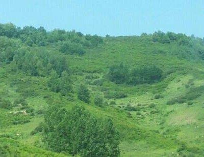 驼梁山上的植被