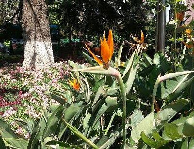 市区的植物园