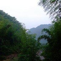 荷花山的竹子也很多