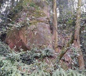 笔架山山顶植被茂盛,有许多裸露的大块岩石。