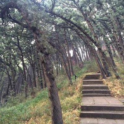 七曲山森林公园