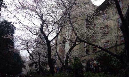 昙华林的花
