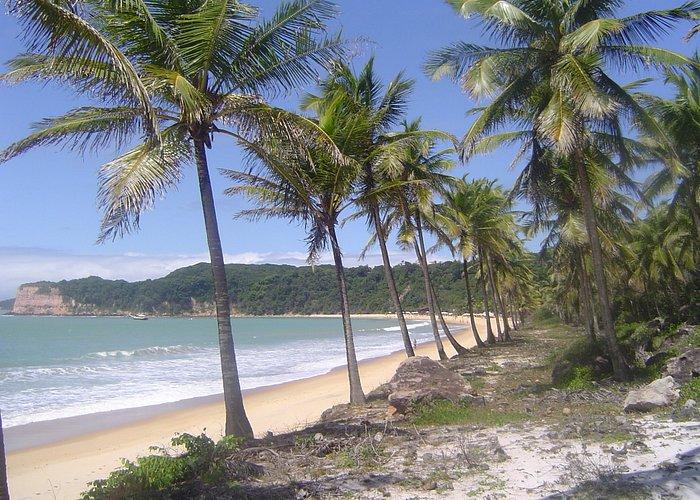 Dolphin Beach , PIPA BRAZIL