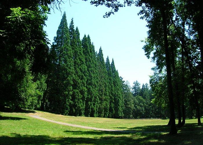 Gaint Sequoia