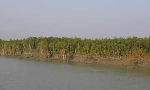 Sunderbans Forest Bangladesh