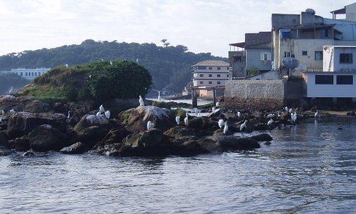 Birds in Macaé Fishing Docks