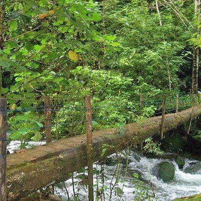 Natural Bridge on Rainforest Hike