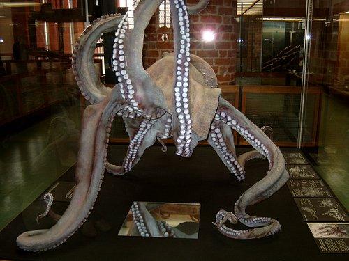 Stralsund Oceanographic museum