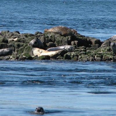 Seals off Brier Island