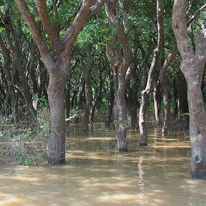 Kompong Phhluk - Flooded Forest