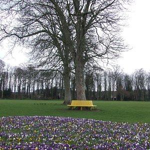 Spring has sprung, da grass is riz, I wonder where dem squirrels is?