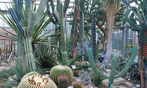 Cactus house in Kiel Botanical Gardens