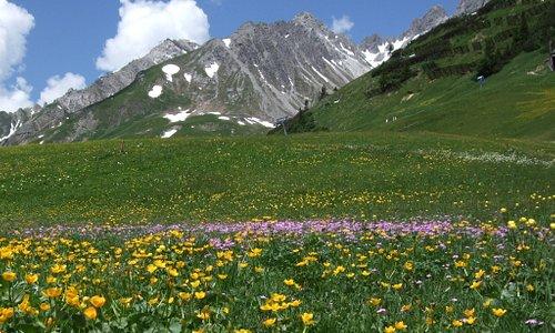 wid flowers above St Anton