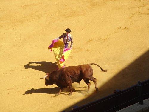 first bull