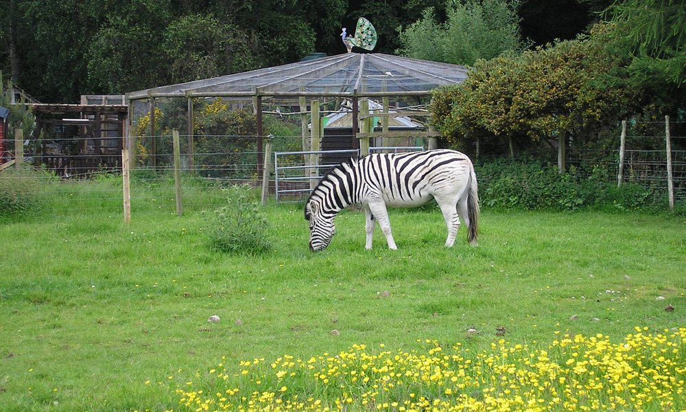 picture of one of the three zebras at the park
