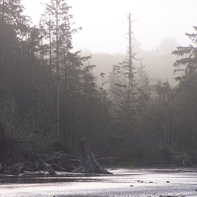 View across the river to the forest