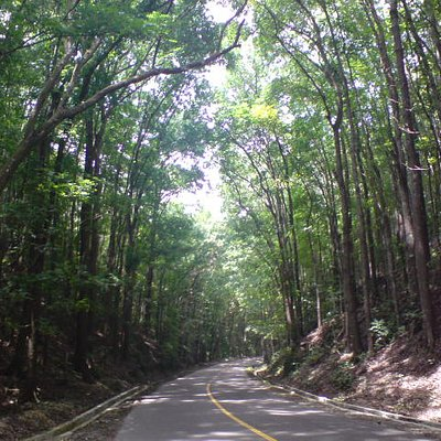 Bilar Manmade Forest (Mahogany Trees)