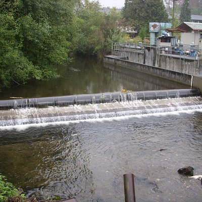 Issaquah Creek / Dam