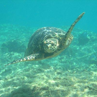 Day of Snorkeling Shacks Beach, Isabela PR - Villa Tropical