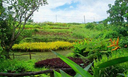 Shell Terrace Garden
