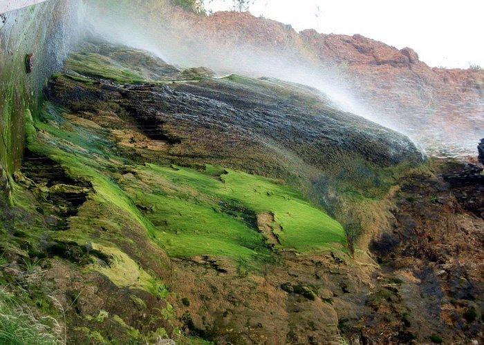 Falls with Algae